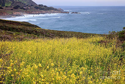 Photograph - Wild Mustard At The Shore by Stuart Gordon
