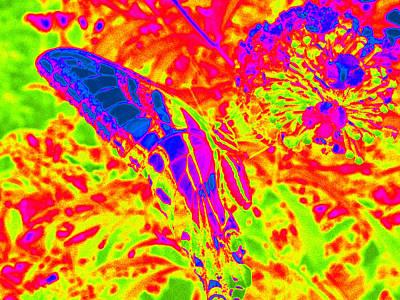 Photograph - Wild N Crazy Butterfly by Kim Galluzzo Wozniak