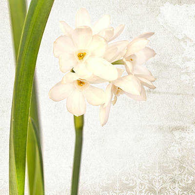 Flower Photograph - Wild Narcissus by Delphimages Photo Creations