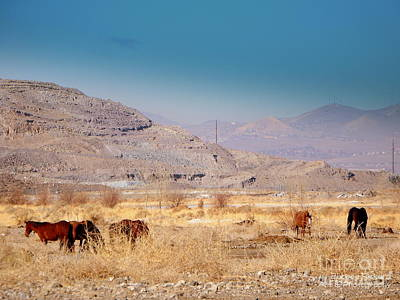 Photograph - Wild Nevada Mustang Herd by Bobbee Rickard