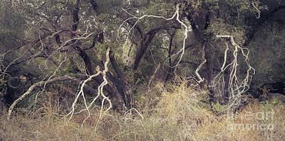 Photograph - Wild Oaks IIi by Alexander Kunz