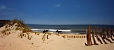 Wild On The Beach Art Print by John Harding