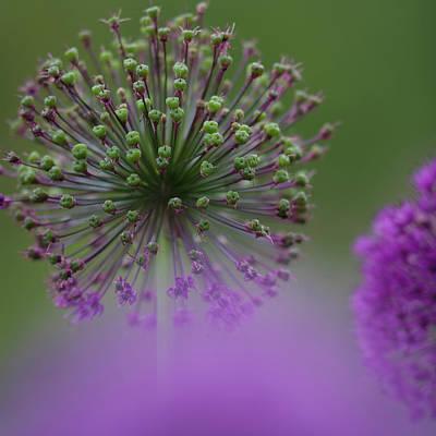 Koehrer-wagner_heiko Photograph - Wild Onion by Heiko Koehrer-Wagner