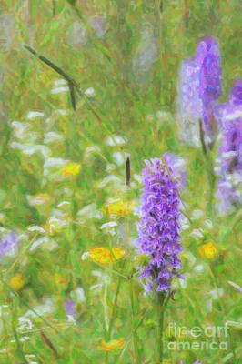 Watercolour Photograph - Wild Orchid Watercolour  by Tim Gainey