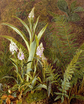 Orchids Drawing - Wild Orchids by Marian Emma Chase