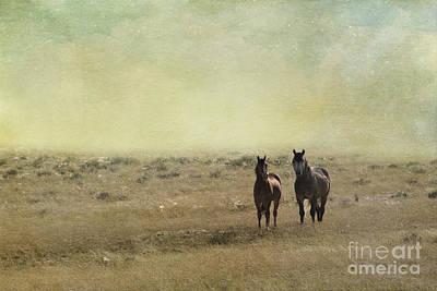 Photograph - Wild Pair by Juli Scalzi