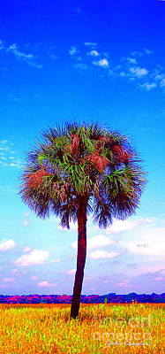 Photograph - Wild Palm 1 by John Douglas