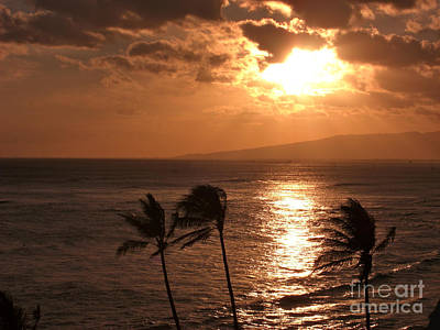 Photograph - Wild Palms Sunset by Deborah Smolinske