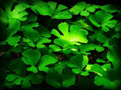 Photograph - Wild Plants by Cyryn Fyrcyd