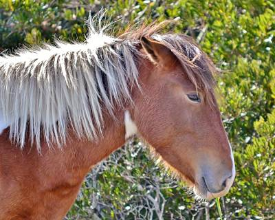 Photograph - Wild Ponies Of Assateague 23 by Kim Bemis