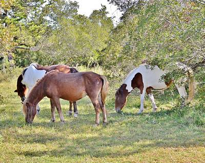 Photograph - Wild Ponies Of Assateague 25 by Kim Bemis