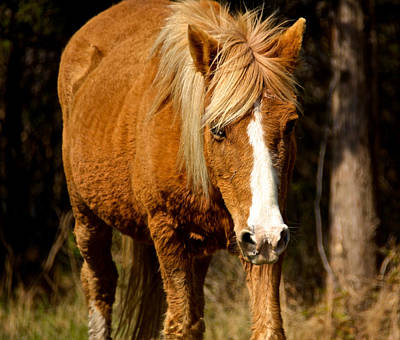 Photograph - Wild Pony by Kathi Isserman