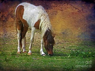Photograph - Wild Pony Ocracoke Island by Dawn Gari