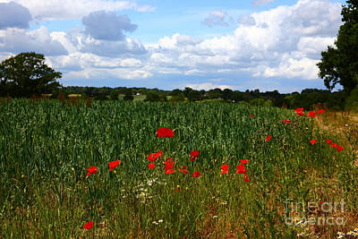 Cornfield Photograph - Wild Poppies And Corn Field by James Brunker
