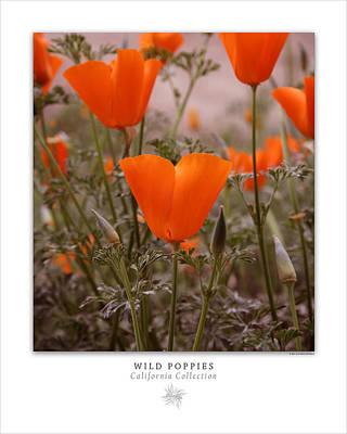 Photograph - Wild Poppies Art Poster - California Collection  by Ben and Raisa Gertsberg