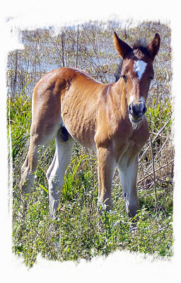 Photograph - Wild Prairie Colt 1 W by Sheri McLeroy