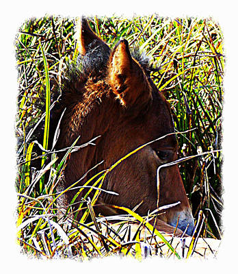 Photograph - Wild Prairie Colt Resting 1 by Sheri McLeroy