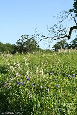 Photograph - Wild Prairie Flowers by Susan Herber