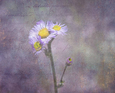 Wild Purple Aster  Art Print