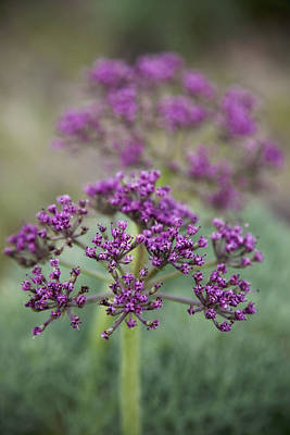 Photograph - Wild Purple  by Crystal Cox