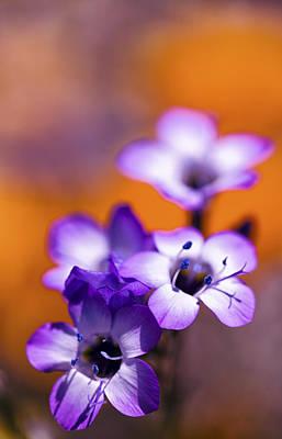 Flower Photograph - Wild Purple Flowers by Janice Sullivan