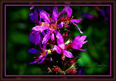 Photograph - Wild Purple by Michaela Preston