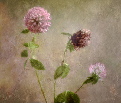 Photograph - Wild Red Clover by Louise Kumpf