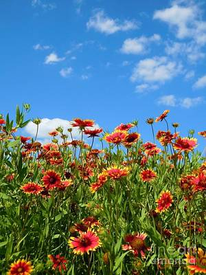 Art Print featuring the photograph Wild Red Daisies #5 by Robert ONeil