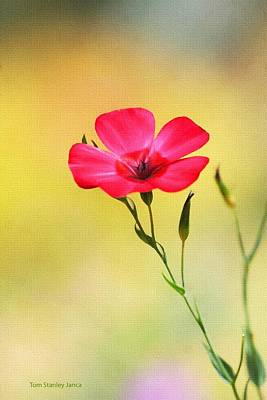 Wild Red Flower Art Print by Tom Janca