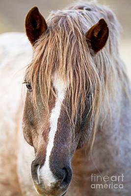 Wild Red Roan Stallion Comes Close Art Print by Carol Walker