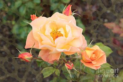 Photograph - Wild Rose by Carol Groenen