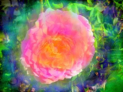 Photograph - Wild Rose by Jessica Wright