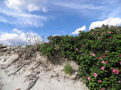 Photograph - Wild Roses After High Tide by Kate Gallagher