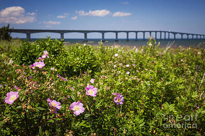 Wild Roses At Confederation Bridge Art Print by Elena Elisseeva