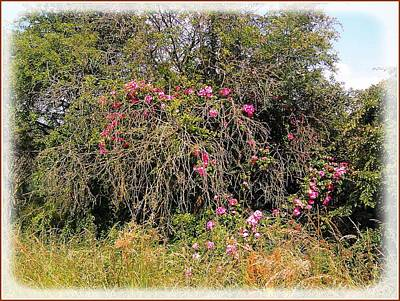 Photograph - Wild Roses Different Angle by Geoff Cooper