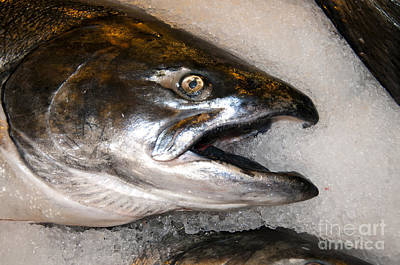 Photograph - Wild Salmon by Brenda Kean