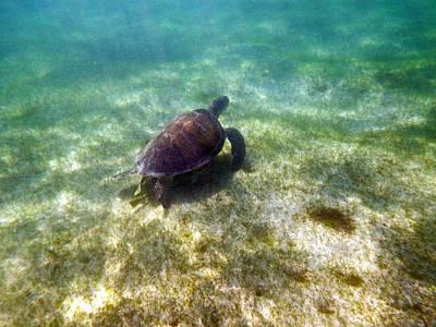 Art Print featuring the photograph Wild Sea Turtle Underwater by Eti Reid