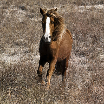 Banker Photograph - Wild Spirit by Betsy Knapp