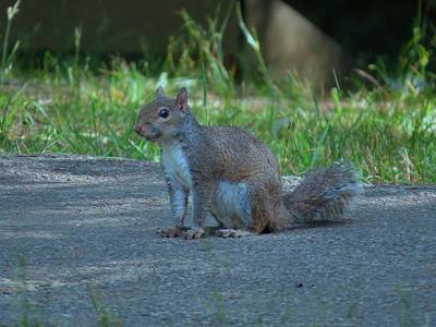Photograph - Wild Squirrel by Kathy Long