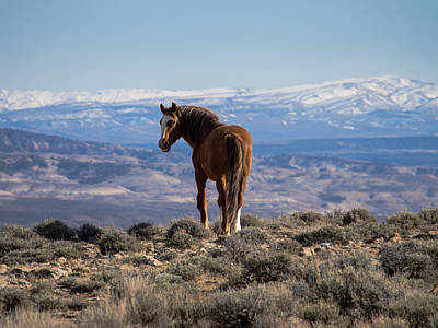 Photograph - Wild Stallion Of Sand Wash Basin by Nadja Rider