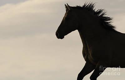 Wild Horses Photograph - Wild Stallion Runs At Sunrise by Carol Walker