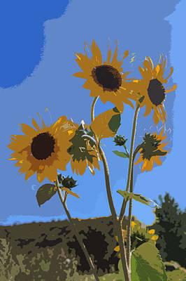 Fibonacci Photograph - Wild Sunfowers Cutout by Scott Campbell