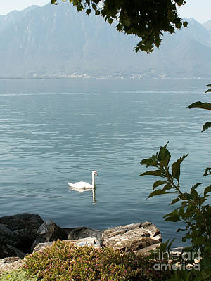 Wild Swan Original by Evgeny Pisarev