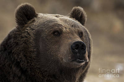 Wild Photograph - Wild Thoughts by Wildlife Fine Art