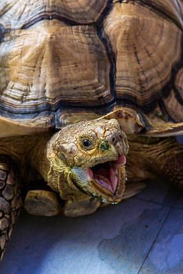 Wild Tortoise Art Print
