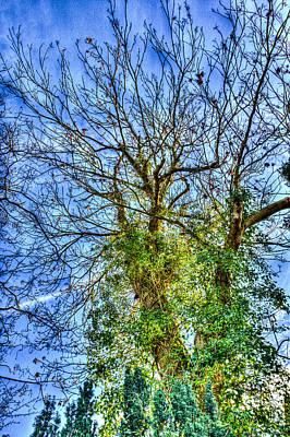 School Teaching - Wild Tree by David Pyatt
