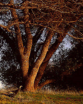 Photograph - Wild Turkey Sunset At Dark Horse by Michele Avanti