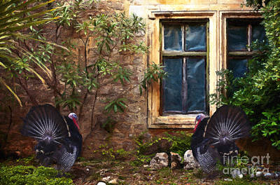 Wild Turkeys Art Print by Milan Karadzic