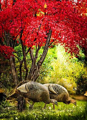 Photograph - Wild Turkeys  by Ludmila Nayvelt