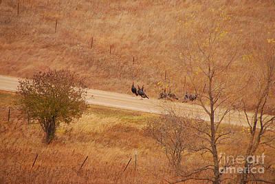 Photograph - Wild Turkeys by Mary Carol Story